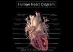 diagram_heart_web