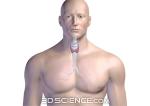 endocrine_thyroid_web