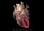 heart_3.0_anterior_section_web