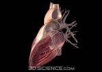 heart_3.0_latcut_web