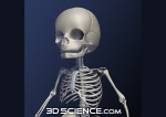 infant_skeleton_close_web